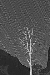 """""""EL ARBOL QUE ARAABA EL CIELO"""" (bresso-fotografias) Tags: sky blackandwhite cliff mountain tree blanco bulb arbol noche nikon iso400 negro dry cielo estrellas d200 montaa seco frio camara sensor barranco startrails starrynight 18mm tripode foto"""
