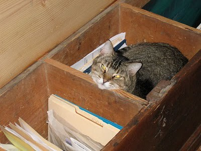 organize_your_cats_12
