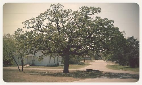 141: Tree beauty