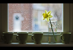 089 (James Sanny) Tags: flowers window canon project 50mm mugs java spring sill cups 7d espresso 365 f18