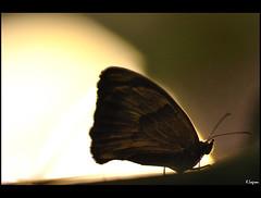 Until the break of day (Kader Lagraa) Tags: old light sunset shadow sun macro ex beautiful beauty composition contrast circle insect photography photo amazing interesting nikon shot image feel sigma calm charming capture shape buterfly learn lense sense silouhete kader 150mm d90 hsm abdelkader lagraa klagraa