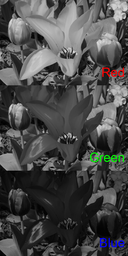 Red tulip channels in ProPhoto gamut