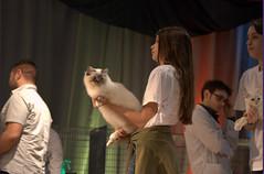 DSC_0089 (Francesco_Fontana) Tags: cat kat chat gato katze mace  macska gatto  con kot gat koka kedi kass katt kissa kttur maka kucing pusa mo   kat     pisic  qattus   kais