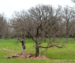 Rock Piles (Adventurer Dustin Holmes) Tags: trees rural farm country missouri fields farms ozarks 2014 rockpiles