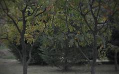 green-leaving (Sunofmarch) Tags: landscape trees colour lessbright autumn d5100