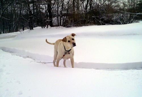 Zeus_snow_12711