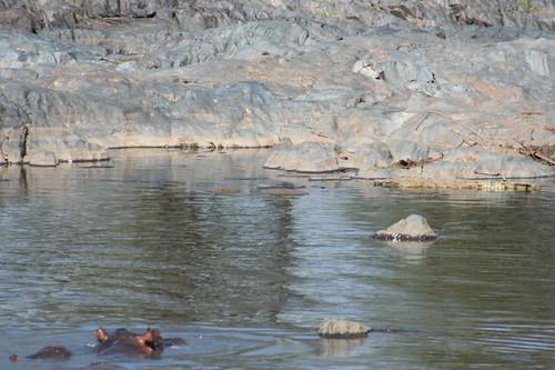 croc watchin', round 1