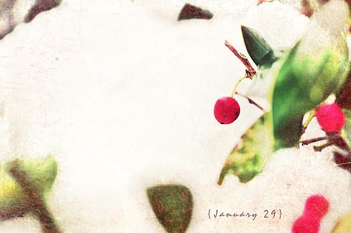 Jan 29