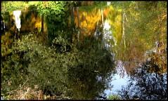 Für AnnA (langkawi) Tags: autumn reflection berlin fall colors herbst reflected langkawi spiegelung tiergarten naturesfinest gespiegelt füranna
