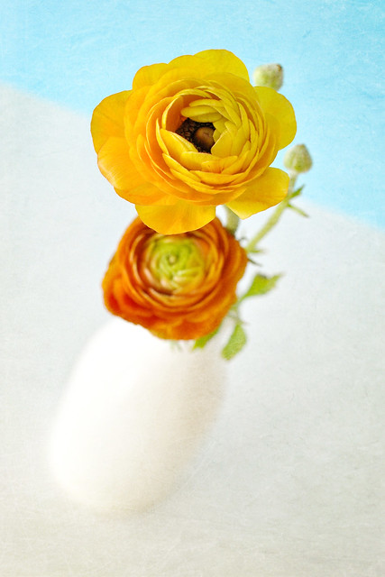 ranunculus florabella