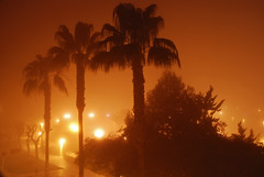 Palmeras en la niebla (glorygg) Tags: palmeras niebla rojales