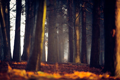 you will find your way (andrew evans.) Tags: lighting morning autumn trees light england mist tree nature misty fog fairytale forest sunrise landscape countryside kent woods nikon bokeh calm ethereal wonderland storybook magical f28 enchanted d3 400mm