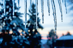 Sunrise through the icicles (pixelmama) Tags: sunrise bokeh icicles 652 friggincold hbw chasinglight project52 frigidtemps focus52 bokehwednesday thebigfivetwo