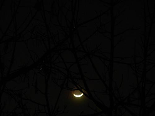 New Moon _ 1546