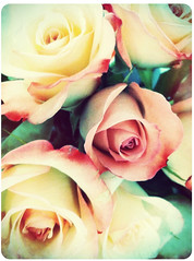 pink roses from my husband (natsukigirl) Tags: flower rose valentine