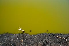 Green Pond (flschen) Tags: africa wasser afrika uganda grn 32 salz katwe