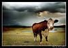 IMG_9142 - Framed (DoctorJ73) Tags: cloud storm field grass canon eos james cow explore steak danny bovine paddock 30d cowpat 1855mmkit