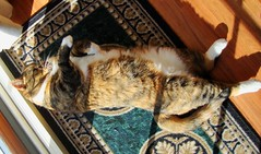 Gracie 10 February 2011 4480b 170 (edgarandron - Busy!) Tags: cats cute cat gracie feline tabby kitty kitties tabbies patchedtabby