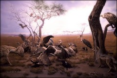 Scavengers (Ronaldo F Cabuhat) Tags: life nyc newyorkcity trip travel vacation newyork art animals canon landscape photography wings fox crow vulture hyena diorama scavengers americanmuseumofnaturalhistory maraboustork canonef24105mmf4lisusm akeleyhallofafricanmammals carlakeley canoneos5dmarkii cabuhat theartofthediorama recreatingnature