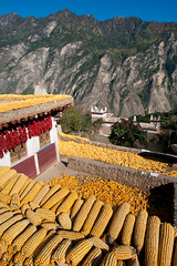 Drying Maize (corn) on the rooftops of traditional Tibetan houses (Alex Treadway) Tags: china houses windows red house mountains building green nature grass yellow stone closeup outdoors photography town corn colorful asia day village close rooftops traditional farming chinese harvest grow scenic rocky sunny bluesky nopeople hills roofs clear hanging tibetan growing walls colourful chilli agriculture cob sichuan eastern picturesque husk maize himalayas levels sweetcorn drying fodder slopes colorimage traveldestination colourimage jiajuzangzhai