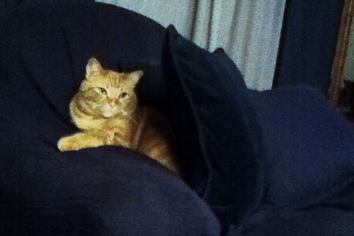 Ptw Leki had himself a nice pillow fort going this evening