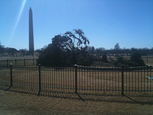 National Christmas Tree blown over