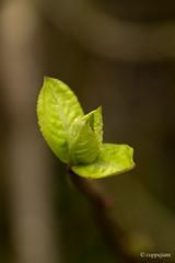 new life Doel (Rogier Coppejans) Tags: flower green nature leaves closeup photoshop wonderful licht leaf groen dof belgie great natuur kleuren doel sluitertijd dichtbij coppejans cs5