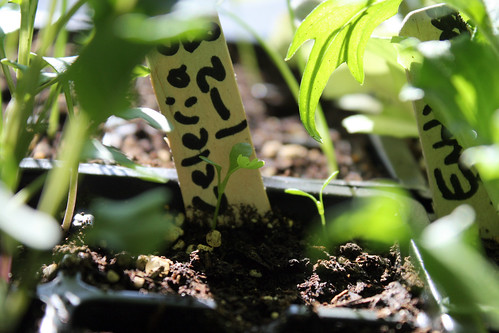 seedlings 032
