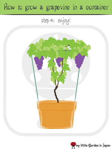 how-to-grow-a-grapevine-in-a-container