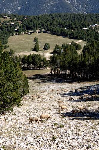 Pistes du Mont Serein, l'été