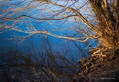 roots & blue reflection (-CyRiL-) Tags: blue light sky landscape lumière bleu reflet ciel arbres paysages végétaux végétal cyrilbkl cyrilnovello