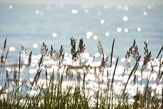 Sillerdab ... (anuwintschalek) Tags: sea summer beach water strand see evening abend sand meer warm wasser estonia sommer july baltic ostsee soe rand meri vesi itämeri 2010 eesti suvi estland sandstrand õhtu 18200vr vääna väänajõesuu liiv nikond90 läänemeri liivarand rannarohi