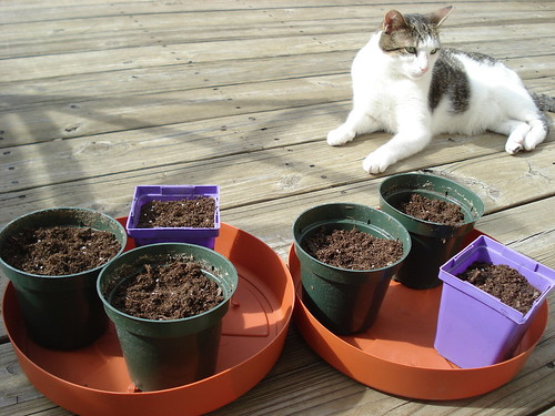 pepper & tomato seeds 1