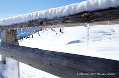 Attraverso lo steccato (FDolfini) Tags: snow ice tirol neve piazza prato braies ghiaccio tirolo steccato pratopiazza