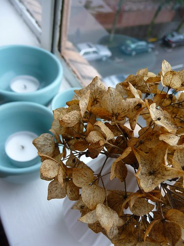 Found, Dried Hydrangea