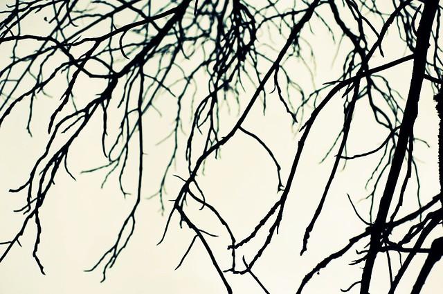 fog limb