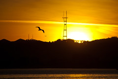 (TheRealMichaelMoore) Tags: sanfrancisco california sunset orange seagulls water birds silhouette oakland gulls twinpeaks sanfranciscobay sutrotower 2011 middleharbor portviewpark