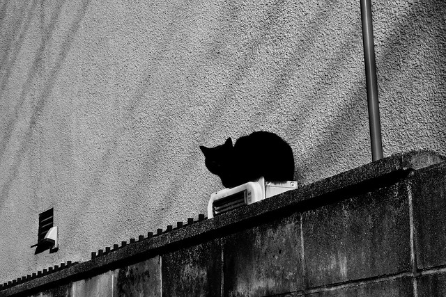 Today's Cat@2011-03-03
