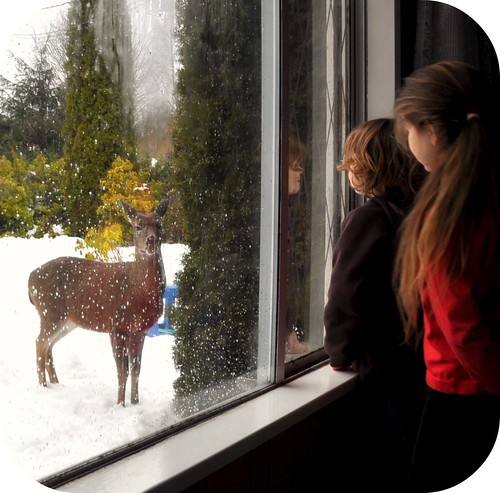Deer Watching