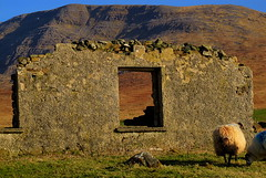 cottage ruin on Mweelrea slope (hmb52) Tags: ireland abandoned rural sheep ruin atlantic connacht silverstrand comayo latedaysun westmayo mweelreamountains veryveryremote dadreen