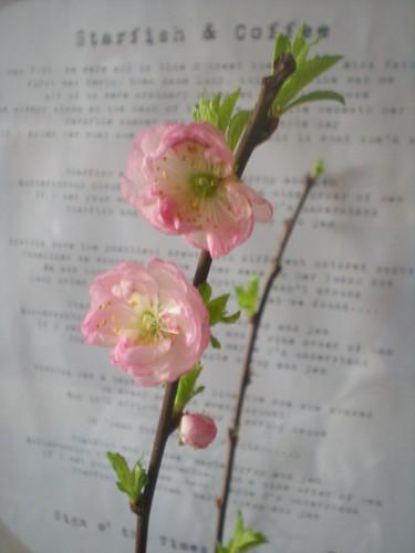 Cherry Blossom by Urbanstems.blogspot