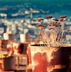 the moment (pamela ross) Tags: winter plant flower texture pen garden 50mm dof minolta bokeh f14 hamburg dry olympus depthoffield relief pot rost ep1
