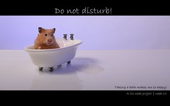 10/52 - Do not disturb (warning : this photo contains nudity) (RobinHoude) Tags: cactus pet animal project rodent nikon bath hamster bubble bain week bathtub nudity weeks trigger 52 mousse projet semaines rongeur strobist cactusv4 d7000