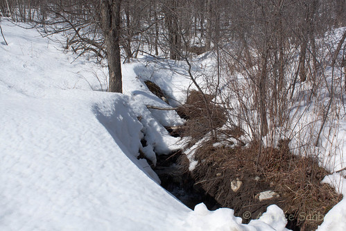 Spring Thaw at the Brook-3.jpg
