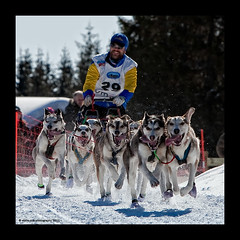 Say cheeeeeese.... all of you! :-))) (stella-mia) Tags: winter dog snow dogs smile norway action highlight bigsmile sleddog hamar sn 70200mm wch canon5dmkii wchathamar
