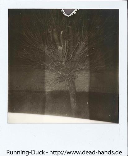Baum bei dunkel