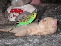 Catbirdie