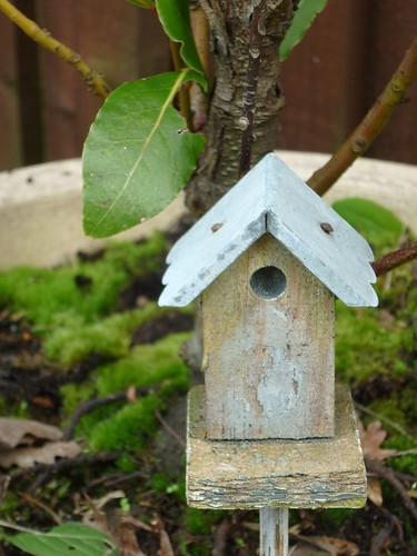 Fairy bird-box