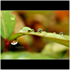 various sizes... (CK_Expresso) Tags: plant macro reflection nature water grass glitter lumix singapore crystal bokeh drop panasonic clear droplet various raining sizes lx3
