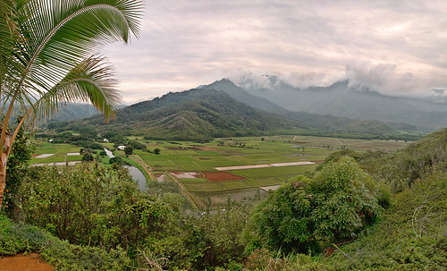 Taro Fields Overlook